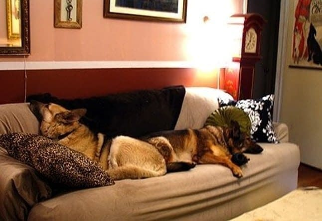 DogCouch